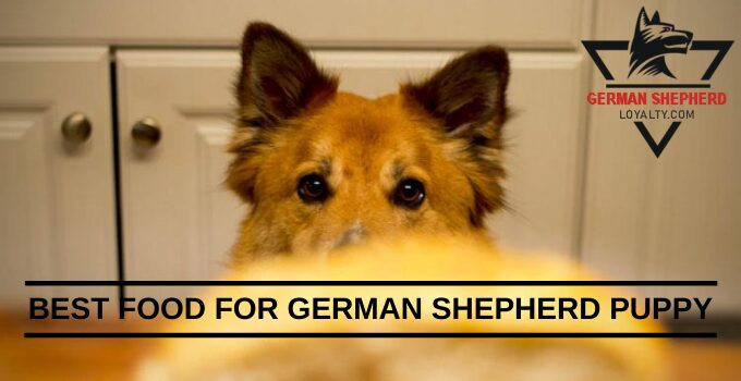 Best Food for German Shepherd Puppy