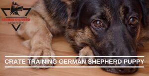 Crate Training German Shepherd Puppy