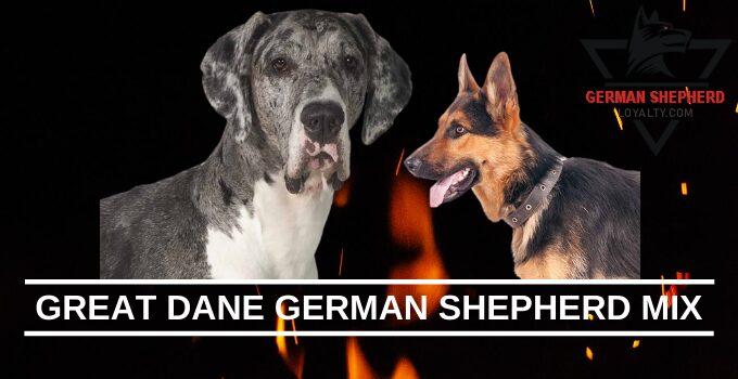 Great Dane German Shepherd Mix