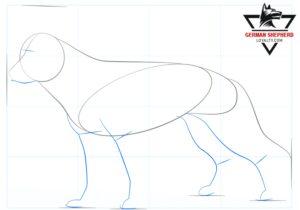 How to Draw a German Shepherd Step 3