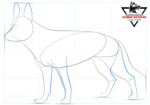 How to Draw a German Shepherd Step 4