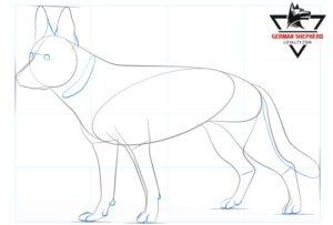 How to Draw a German Shepherd Step 5