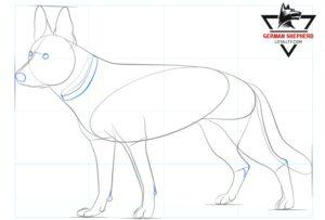 How to Draw a German Shepherd Step 6