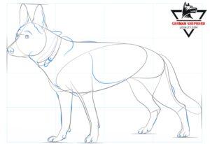How to Draw a German Shepherd Step 7