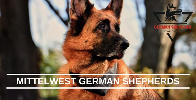 Mittelwest German Shepherds