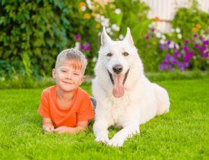 White German Shepherds Good With Kids
