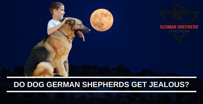 Do Dog German Shepherds Get Jealous?