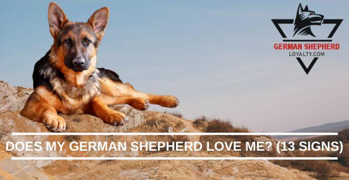 Does My German Shepherd Love Me? (13 Signs)