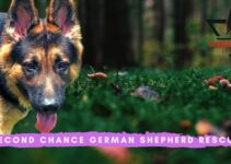 Second Chance German Shepherd Rescue