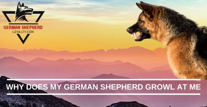 Why Does My German Shepherd Growl at Me