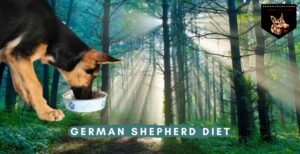 German Shepherd Diet