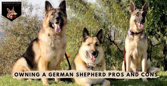 Owning A German Shepherd Pros And Cons