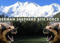 German Shepherd Bite Force