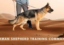German Shepherd Commands List